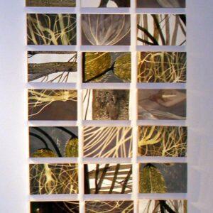 Atlante Vegetale | Lucia Scuderi - Illustratrice, autrice, pittrice