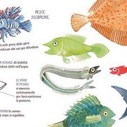 Pesci | Lucia Scuderi - Illustratrice, autrice, pittrice